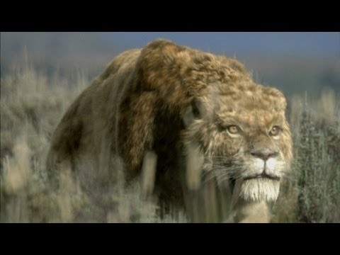 Sabre-Tooth Cat: Predator by Design - Ice Age Giants - Episode 1 Preview - BBC Two