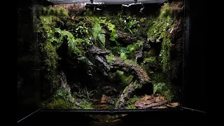 A Small Puddle In A Humid Jungle Dart Frog Paludarium | 축축한 정글 속 작은 웅덩이 다트프록 팔루다리움 | Indoor Garden