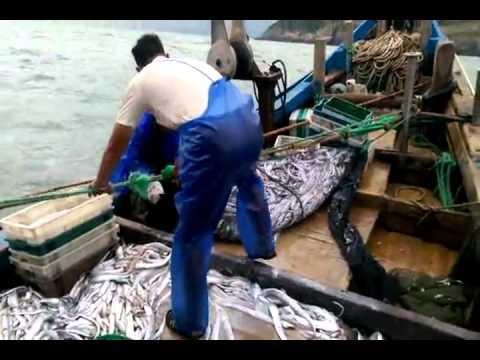 漁人的搏鬥-北竿橋仔漁民白帶魚大豐收  攝影:陳鵬雄