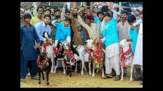 HASSAN GOAT FARM SLIDESHOW 2016