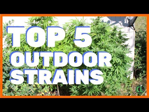 Top 5 Strains to Grow Outdoors from YouTube · Duration:  11 minutes 1 seconds