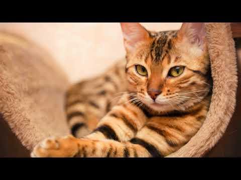Как пережить смерть любимого кота советы психолога