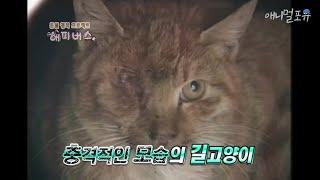 한쪽 눈을 잃고 우유만 먹는 충격적인 모습의 길고양이.…