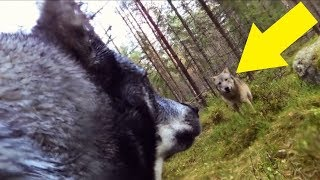 Guy Who Put A GoPro On His Dog Is Chilled To The Bone When He Looks At The Footage