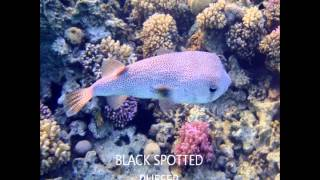 RED SEA FISH BY NAME