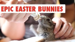 Epic Easter Bunnies | Funny Pet Video Compilation 2017