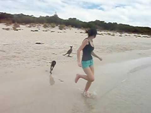 Baby Kangaroo swimming at the Beach
