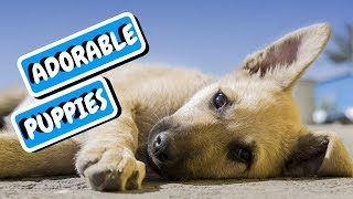 Dogs and Cats Funny Videos | Funny Animal Moments | Funny Dog Compilation