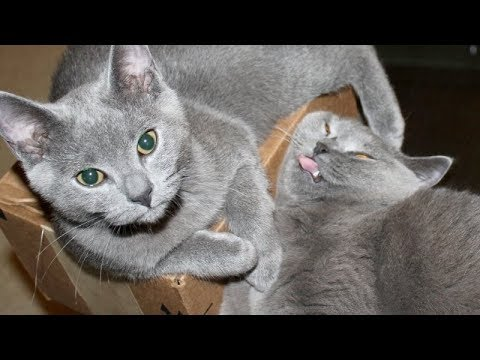 START THE DAY with a dose of THE FUNNIEST CAT videos of ALL TIME - Funny CAT compilation