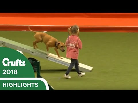 Isi & Dakota the Staffie steal the hearts at Crufts 2018