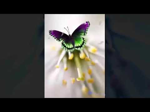 abraham-hicks-you-have-to-feel-it-in-your-solar-plexus-no-ads-during