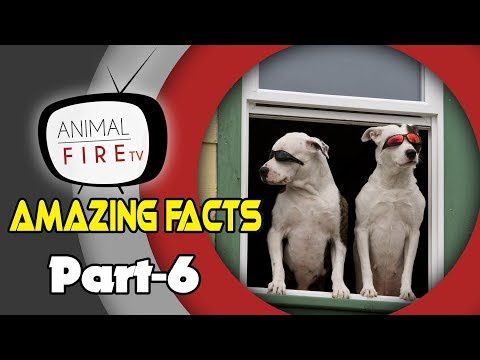 10 Amazing Facts about Dogs - Part 6 (Dog Facts)