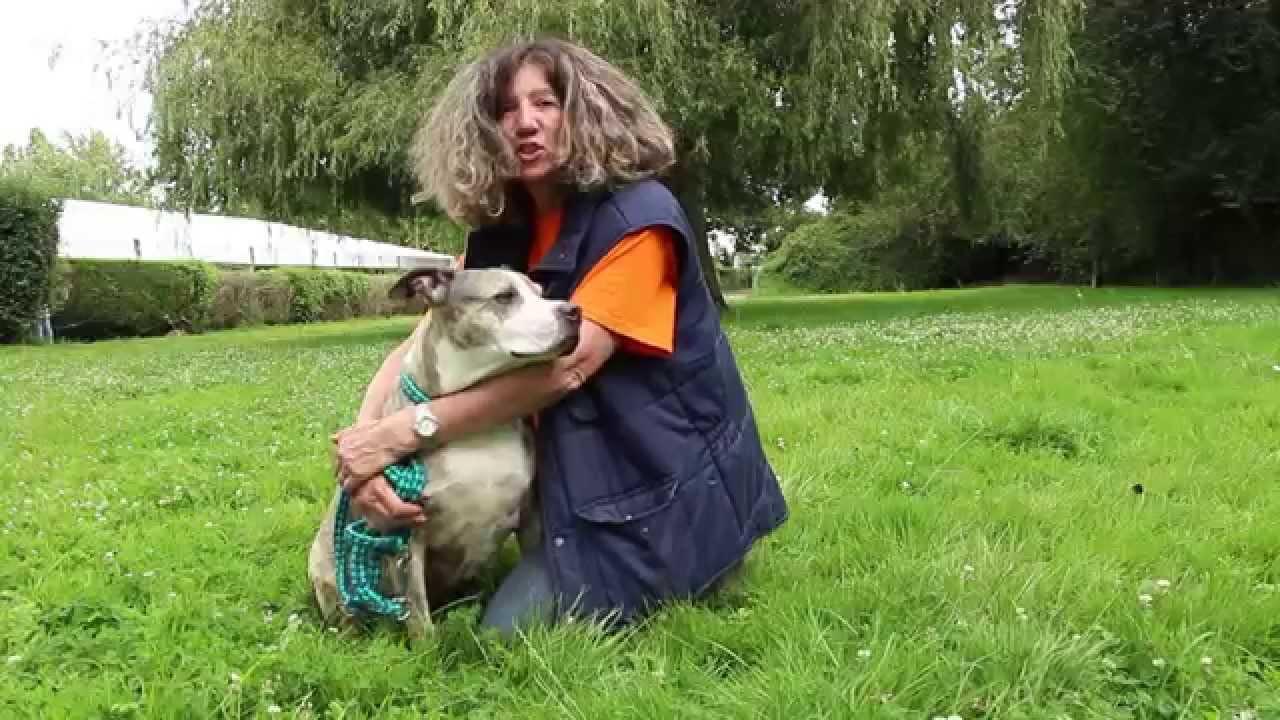 Bella A Adopter Au Refuge Spa D Orgeval Youtube