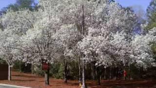 Richard Clayderman los sonidos del silencio thumbnail