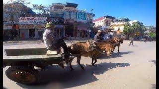 ลุยเวียดนาม(Vietnam) EP82:เดินทางจากเมืองลอ(Nghĩa Lộ) ไปเยียนบ๋าย(Yên Bái) ไร่ส้มเวียดนามดกขนาด