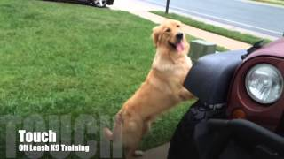 1 Year Old Golden Retriever, [lots Of Distractions, Owner Testimonial] Baton Rouge Dog Trainer