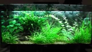 Juwel Rio 240 Fish Tank For Sale - Sold