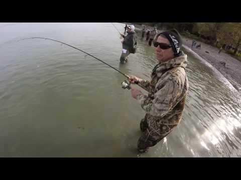 Lake Erie Steelhead Spoon Fishing 2016