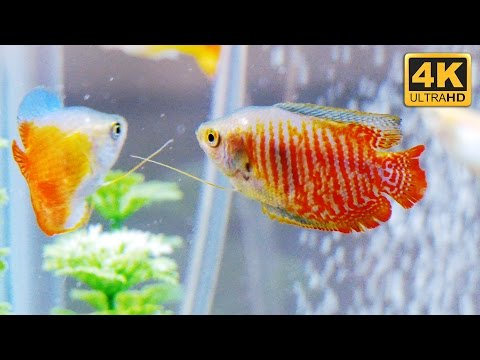 New Freshwater Tropical Fish Community Aquarium