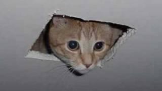 Ceiling Cat Prayer