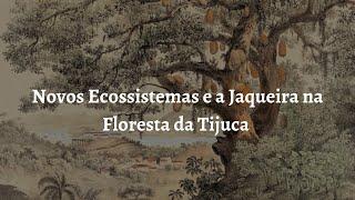 Novos Ecossistemas e a Jaqueira na Floresta da Tijuca