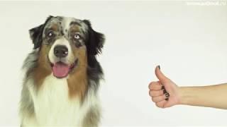 Как вычесывать собаку с шерстью средней длины