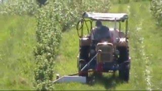 Oprysk herbicydów w porzeczkach