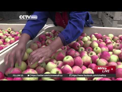 South Africa wins approval to sell more fruit and nuts to Indonesia