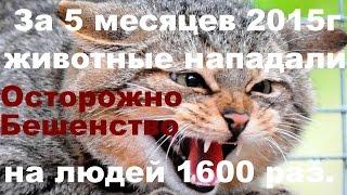 Кошки и Собаки болеют бешенством, предупреждают ветеринарные врачи Липецкой области