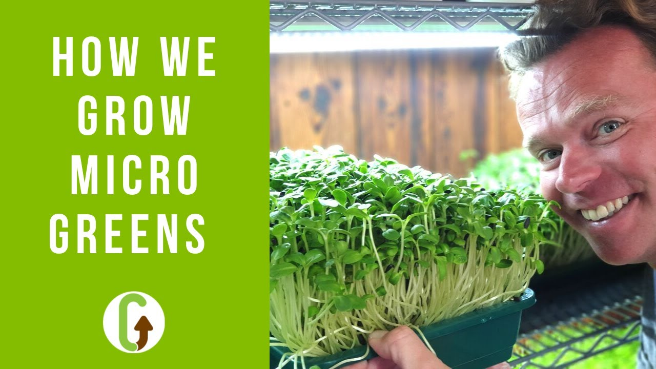How To Grow Microgreens The Ultimate Guide Grocycle