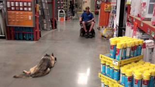 Alpha Dog Training Ga - Levi