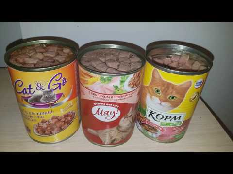 Какой бюджетный корм выберет кот? Тест кормов Повна Чаша (Фоззи-Фора), Cat&Go (АТБ), Мяу (Кормотех)