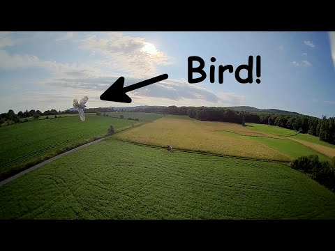 Фото Bird almost crashed into my 220g drone! #fpv #drone #dronefails