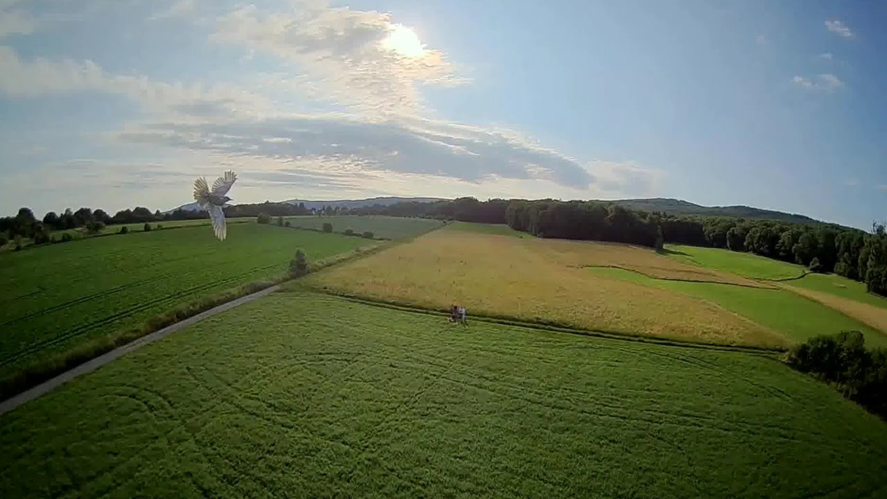 Bird almost crashed into my 220g drone! #fpv #drone #dronefails картинки