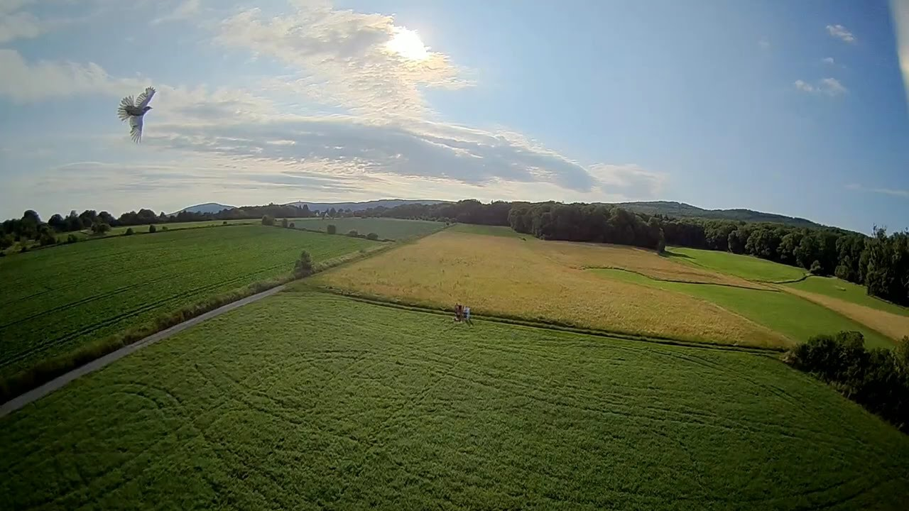 Bird almost crashed into my 220g drone! #fpv #drone #dronefails фотки