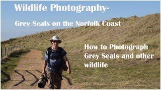Wildlife Photography Grey Seals on the Norfolk coast
