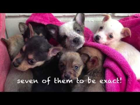 Thumbnail: Heartbroken mother dog reunited with puppies