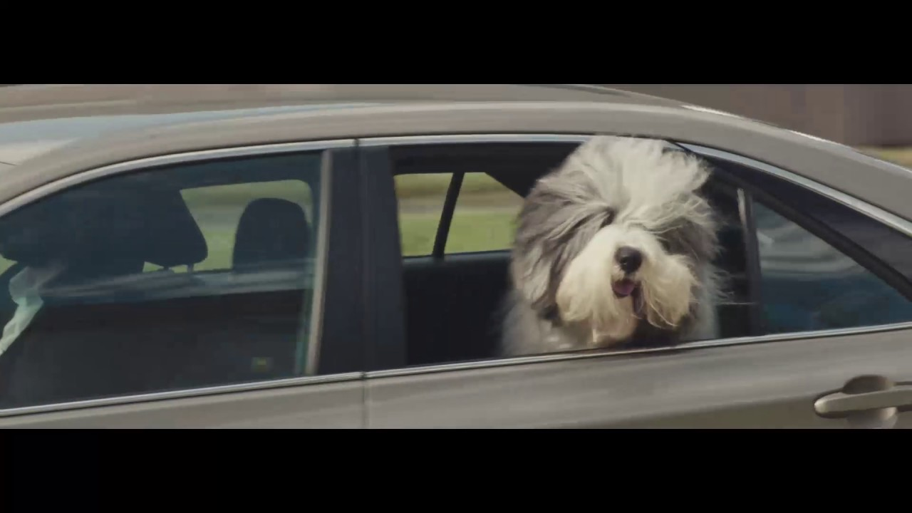 Download The Dulux Dog