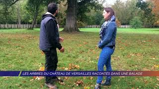 Yvelines | Les arbres du château de Versailles racontés dans une balade