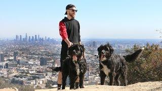 次はどこへ行くのかな?旅の途中で拾われた子犬たち、すっかり大きくなって冒険生活続行中!