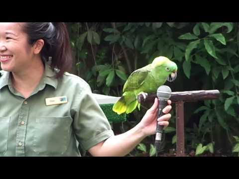 High Flyers Show At Jurong Bird Park