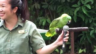 High Flyers Show At Jurong Bird Park