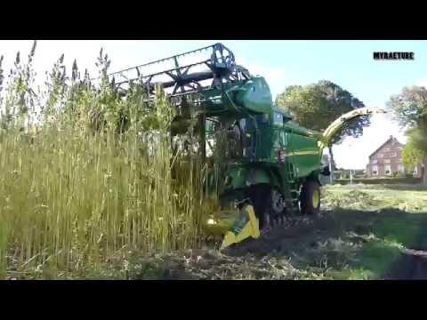 Harvesting Hemp Seed