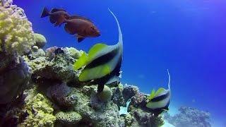 Tauchen in Ras Disha #1 - Ägypten - Hurghada - Makadi Bay - Scuba Diving 2015 - Drift  Ghost s(Letztes Jahr waren wir in Ägypten einen Tauchurlaub machen. Gewohnt haben wir im Hotel Sunrise Select Royal Makadi südlich von Hurghada. Beim Hotel war ..., 2016-10-12T21:03:18.000Z)