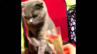 Funny videos just for laughs 2015. Funniest videos - funny animal videos, people falling.