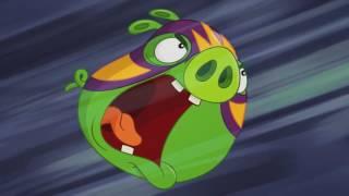 Злые птички - Энгри Бердс - Король ринга (S3E15) || Angry Birds Toons 3 season