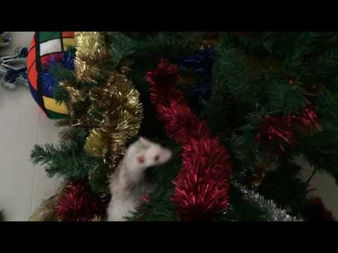 Ferrets in the Christmas Tree