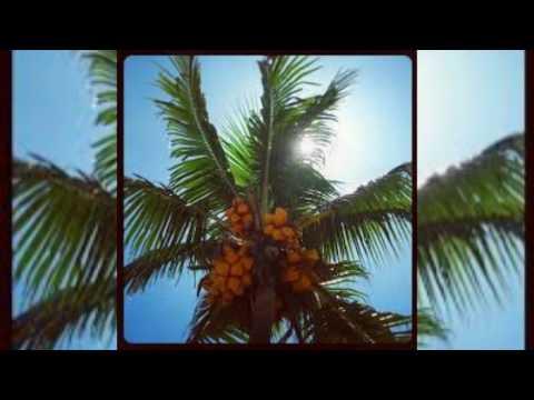 Ono Na Maile - Kabani [Classics Mixdown]