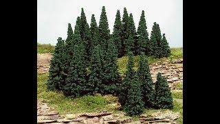 drzewa iglaste prezentacja