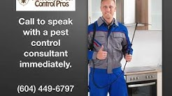 Bee, Wasp, and Hornet Removal - Vancouver Pest Control Pros